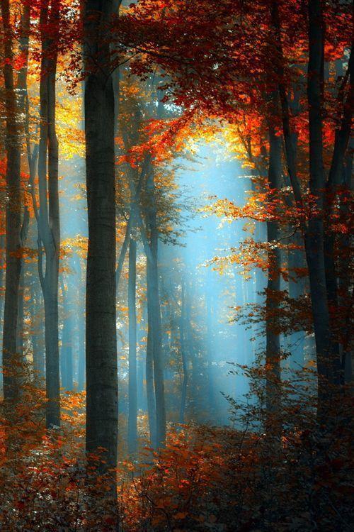 ✿ڿڰۣ Autumn Forest #nature #photography