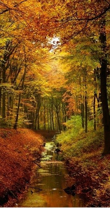 Autumn in Netherland.