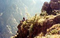 Colca Canyon, Peru Travel Guide: Colca Canyon Peru