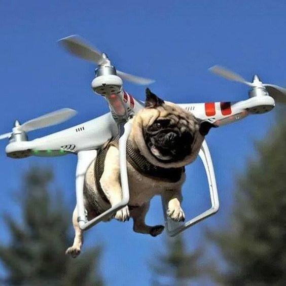 drone humor - Google keresés