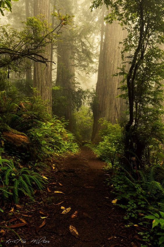 Druids Trees: #Forest path.
