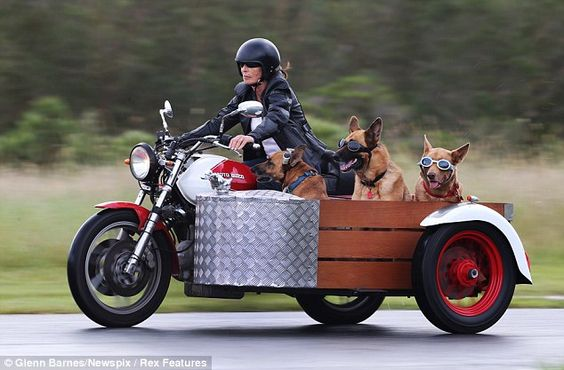Faithful companions: Mary Mayhead treats her dogs Hine, Mari and Kiri to a spin in the sidecar of he