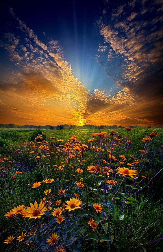 Fantastic landscape photograph of a field of daisies at sunrise in Wisconsin, entitled