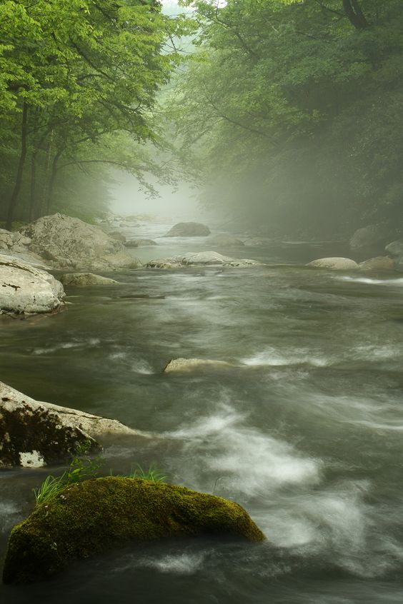 Fog over a river in the Smoky Mountains