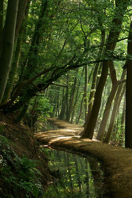 Forest Paths by ajn elemans:
