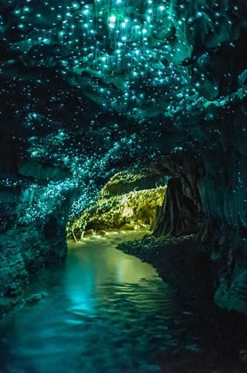 Glowworm Caves in Waitomo, New Zealand. Went in this cave and saw the glow worms! It's complete darkness and you're in a boat! They didn't allow pics. It was amazing!