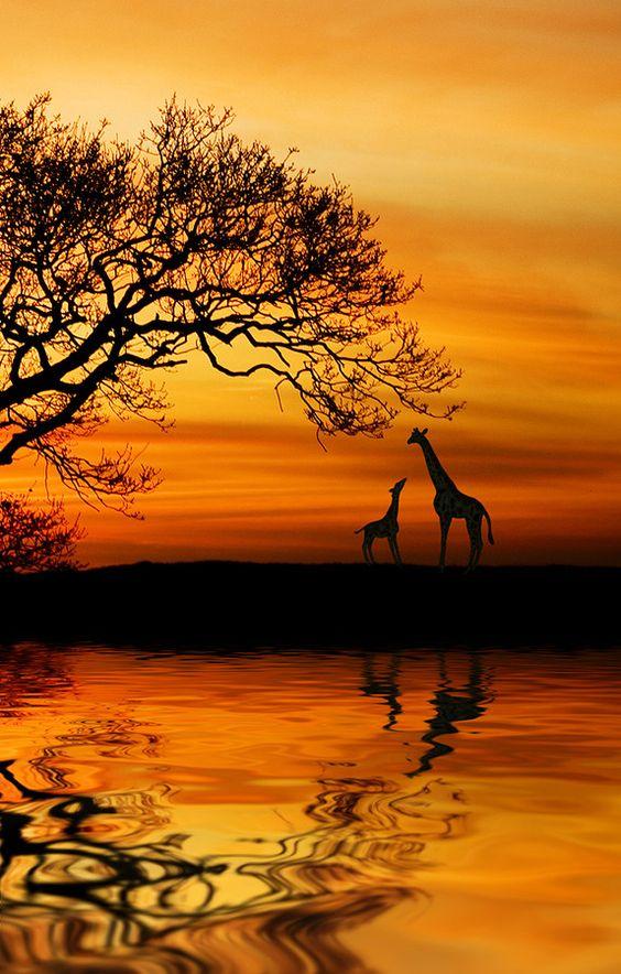 Golden Nature ~ 'Wild ' Dawn' by Martin