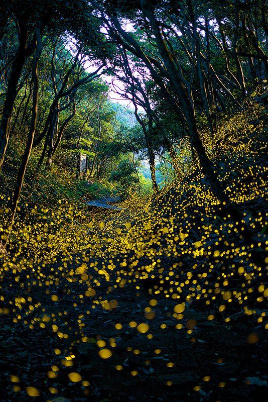 Into The Dream - See Firefly wild dance, Wakayama, Japan!!!!進入夢境 - 見野生螢火蟲的舞蹈,和歌山縣,日本!!!!