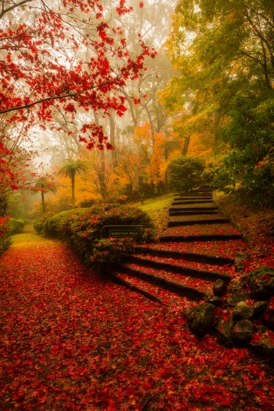 Mt Wilson - Laburnum Steps by Kalan Robb