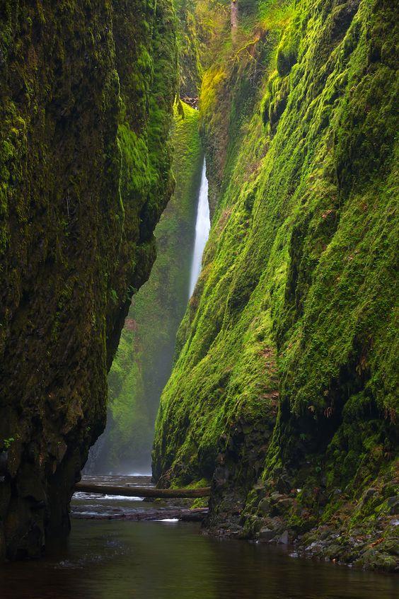 Oneonta Gorge, Oregon via  #Oregon