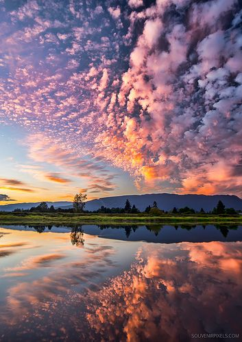 Perfect Pink by James Wheeler ~