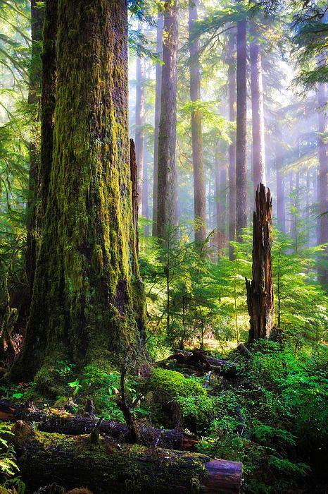 Rainforest in Olympic National Park, Washington