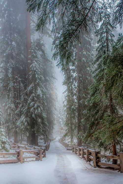 ❥ Snowy country road