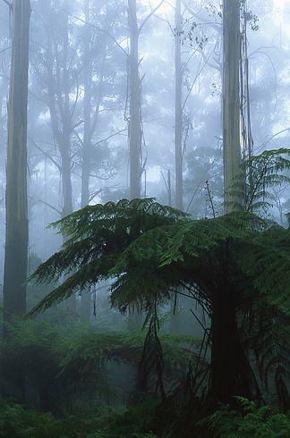 The cloud forests of the Dandenong Ranges. | 34 razones por las que Australia es el lugar más hermoso en la tierra