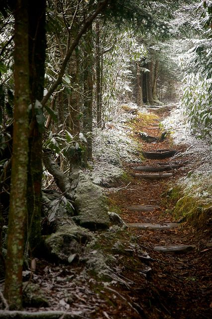This softly snow-kissed forest path begs for some exploration… If only *sigh* ~Charlotte (PixieWinksFairyWhispers)