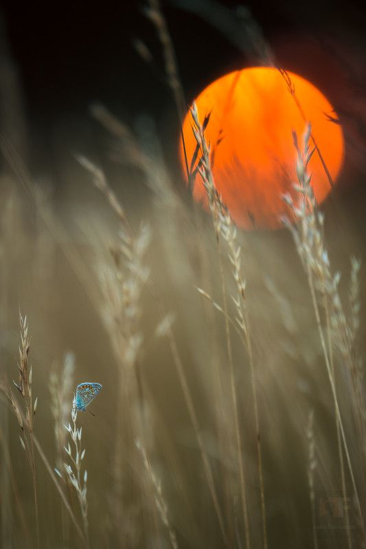 ✯ Time To Say Goodnight Butterfly