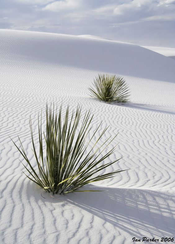 White Sands National Monument, New  this is one fun place to go and walk on the gypsom  and you can see it forever . its a vast area ...go see  repinned www,.