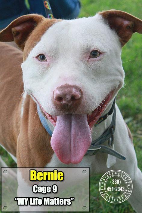09 Bernie