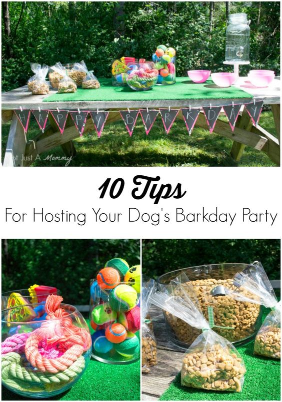 10 Tips For Hosting Your Dog's Barkday Party #pawstosavor #ad #client