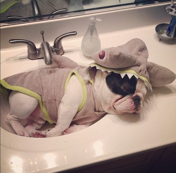 12 French Bulldogs You Need To Be Following On Instagram | Buzzfeed