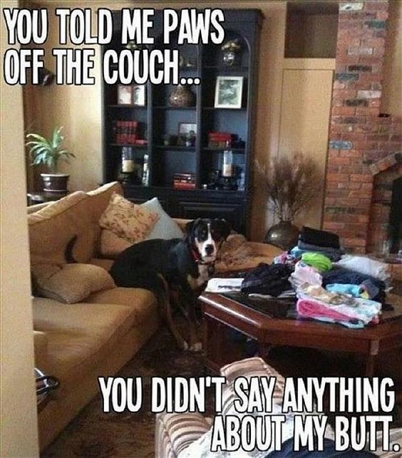 20 REALLY FUNNY ANIMAL PICTURES | Shining world