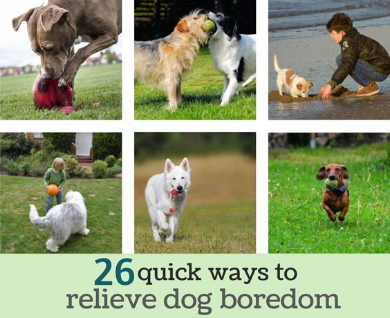 26 quick ways to relieve dog boredom. #dog #behavior #activity