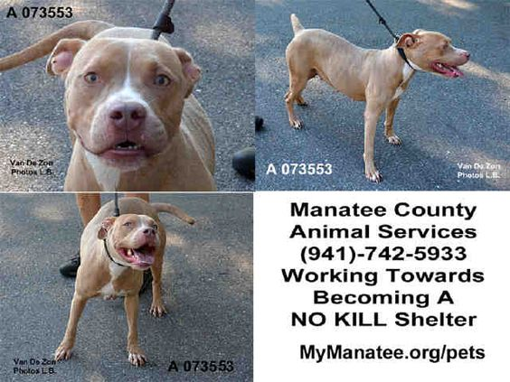 ★3/23/16 STILL THERE!!★: Animal Shelter adopt a pet; dogs, cats, puppies, kittens! Humane Society, SPCA. Lost & Found.
