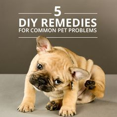 5 Natural Home Remedies for Common Pet Problems