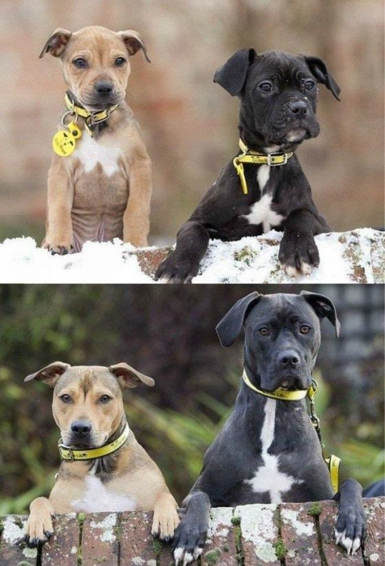5 years together. Doggie sibling pic through the years, so cute!