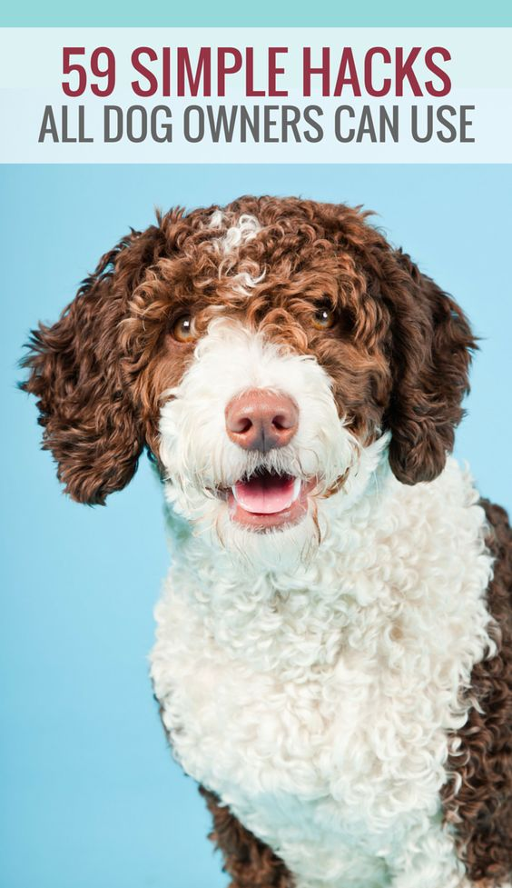 59 Simple Hacks All Dog Owners Can Use