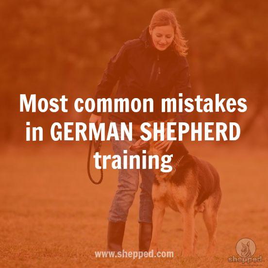 6 common training mistakes that most German Shepherd owners make  #germanshepherd #gsdtraining
