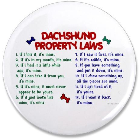 A dachshund owner will understand! I'm going to paint this and put it on our front porch! Love my furbabies!