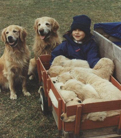 A girl and her Goldens ~ A dream come true ❤