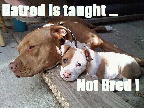 A good lesson for all of us. #dogs From Bitches and Studs Pit Bull Terrier