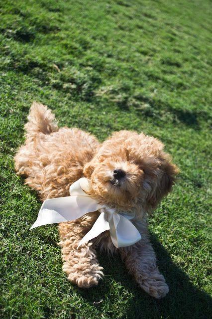 A Puppy Update