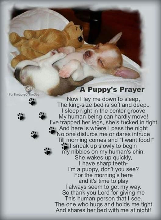 A Puppy's Prayer, so sweet. #dogs #puppies #pets #animals