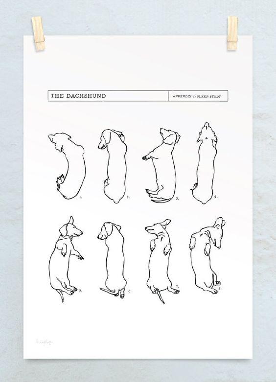 A3 Dachshund Sleep Study Art Print. Illustrations of my pet dachshund's sleeping postions in black on white. $, via Etsy.