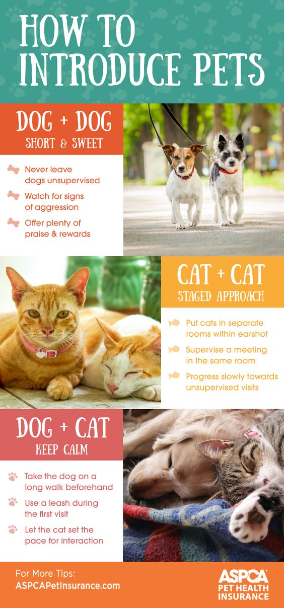 Adding a pet to your home? These tips can help make the transition less hairy.