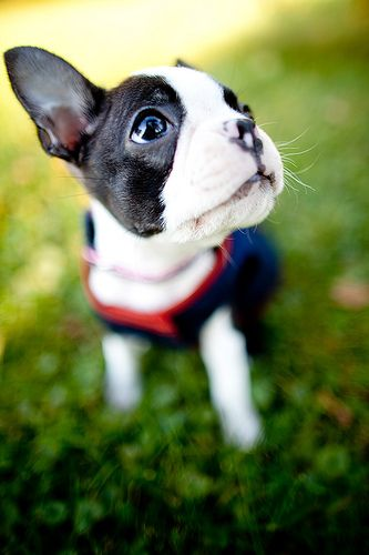 Already decided we'll be getting a french bull dog as our next pup. Even though our dogs will never die (knock on wood).