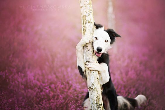 An adorable dog photo by a pet photographer,Alicja Zmyslowska. How good looking it is! #DogPortrait #pet #dog