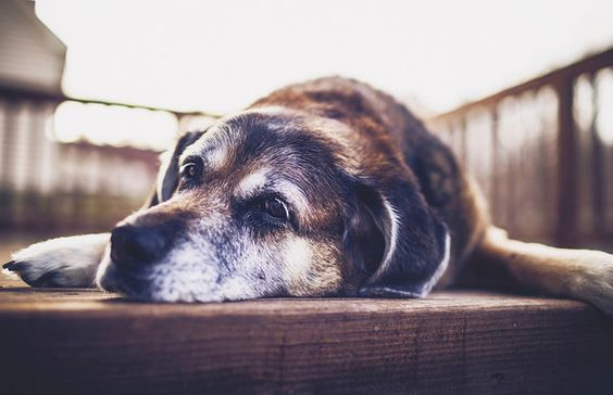 """…and my spot on the porch."" 