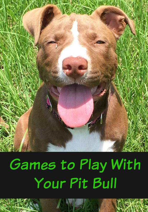 Are you bored with the same old games to play with your pit bull? Check out our fun games here! You'll both love bonding while working out your energy!