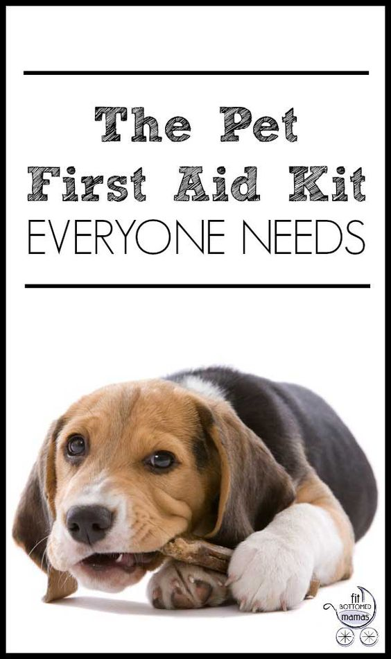 Are you prepared in case of a pet emergency? | Fit Bottomed Mamas