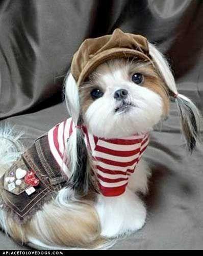 Geez this pup is rockin' it