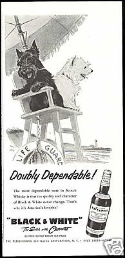 Black and White Scottish Terrier lifeguard ad