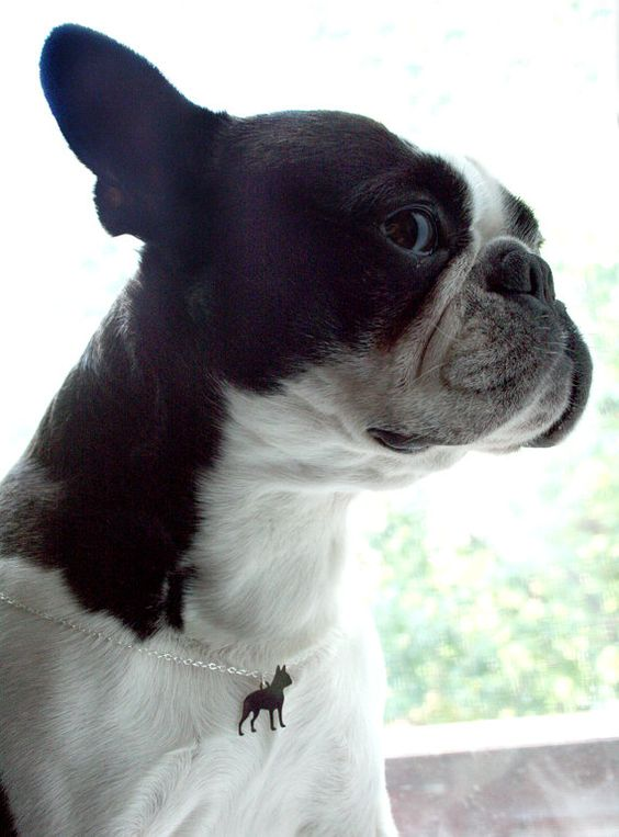 Boston Terrier Necklace by mooshygooshies on Etsy, $