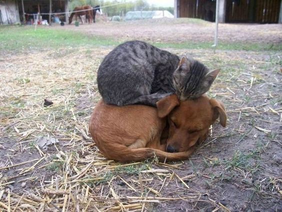 Sometimes, cats get a bad rap. These kitties are here to prove that cats truly are the best kind of friends.