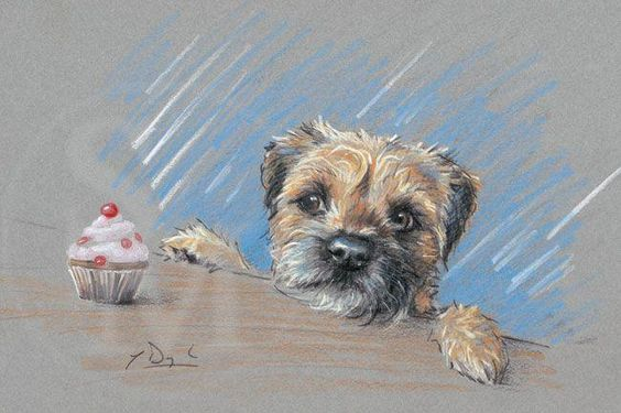 Calorie Counter. Border Terrier dog pencil sketch by Paul Doyle