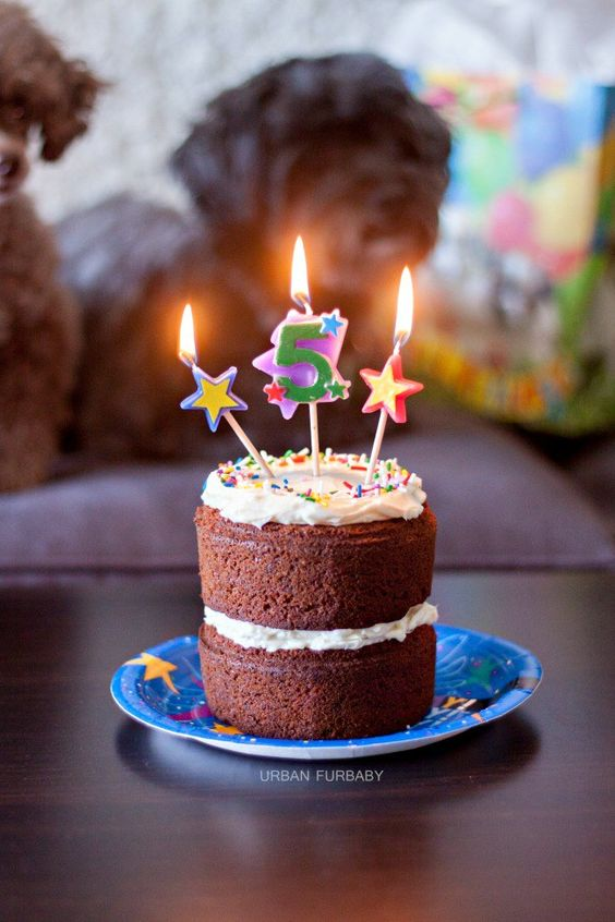 Celebrate your furbaby's birthday with a deliciously homemade moist carrot cake even you can try it too! Two years later and another birthday party for my oldest furbaby, Grizz-Lee. ♥ Unlike Grizz's first birthday party to celebrate his 3rd birthday with his friends, this party was instead, more intimate. Just the family of four (two owners, myself included, not shown). Being that I don't currently have