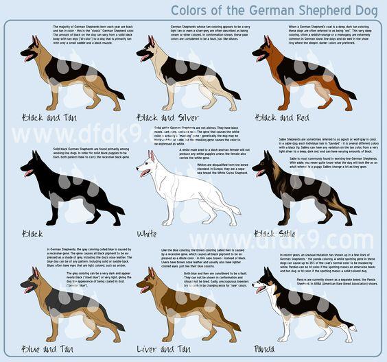 colors of the #German #Shepherd #Dog